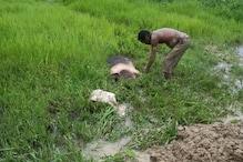 নাজিৰাত আফ্ৰিকান ছোৱাইন ফিভাৰৰ আতংক, বিমোৰত পৰিছে গাহৰি পালক, সপ্তাহটোত মৃত্যু৫৩টাকৈ গাহৰিৰ