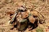VIDEO: माओवादियों ने फिट किए थे ये 5 बम, सुनिए धमाके