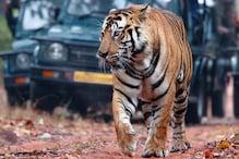 VIDEO: रणथंभौर में बाघों को ऐसे बचाएगी वॉलेंटियर्स की ये टीम