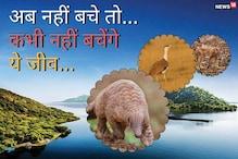 ये हैं राजस्थान के सबसे दुर्लभ 5 जीव, ये अब नहीं बचे तो कभी नहीं बचेंगे