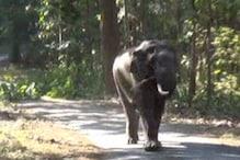 VIDEO: यहां पका कटहल खाने आते हैं हाथी