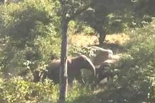 हाथियों का समूह चिरमिरी के रिहायशी इलाकों में पहुंचा, वन विभाग सक्रिय