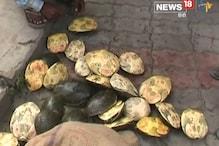 बोरों में बंद मिले 328 कछुए, दो महिलाएं गिरफ्तार