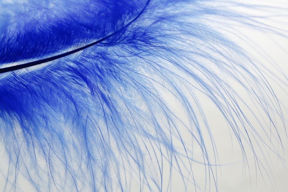 अभिनेता, लोहा कारोबारी या राजनीति से जुड़े लोगों को नीले रंग से होली खेलनी चाहिए.