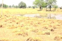 VIDEO: आंधी ने उड़ाई पुली, बरसात ने मंडियों में अनाज को किया सराबोर