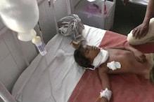 आदमखोर कुत्तों के हमले में घायल हुई बच्ची की मौत, मरने वालों की संख्या 14 हुई