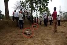 20 से अधिक बंदरों के मृत पाए जाने से क्षेत्र में दहशत
