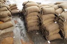 बैमौसम बारिश से समर्थन मूल्य का हजारों क्विंटल अनाज भीगा