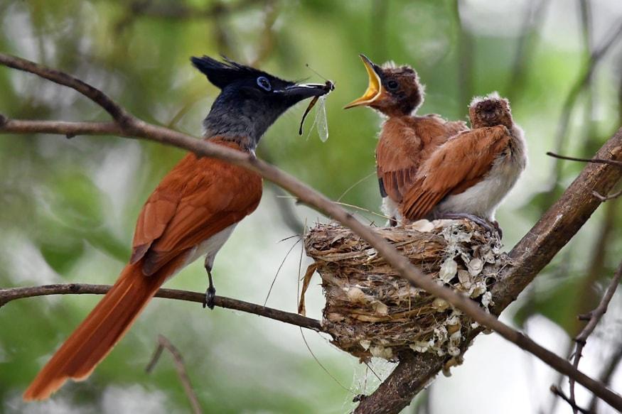 Bhilaia-chhattisgarh-wildlife photography