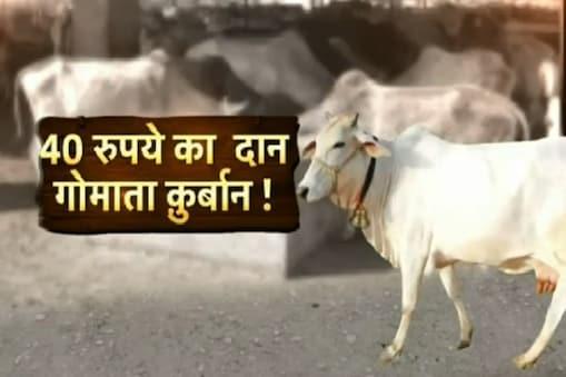 गोशाला में गाय 'सिस्टम' की शिकार