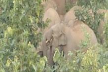 VIDEO: हाथियों के उत्पात से ग्रामीण परेशान