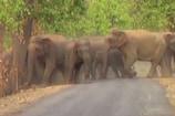 VIDEO: हाथियों के दल ने 64 वर्षीय महिला को रौंदा, मौके पर मौत