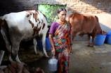 10 नहीं आधा लीटर दूध दे रही हैं सरकार से मिली गाय, किसान कह रहे- वापस ले लो