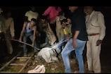 VIDEO: घर में घुसा 15 फुट का मगरमच्छ तो उड़ गए सबके होश