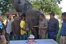 VIDEO: हाथियों ने केक काटकर मनाया विश्व हाथी दिवस