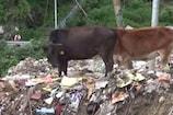 VIDEO: पौड़ी में चारों ओर पसरा है कूड़ा, लोगों ने प्रशासन के खिलाफ खोला मोर्चा