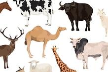 गधी, घोड़ी और जिराफ समेत उन जानवरों के दूध, जो हैं दुनियाभर में हिट