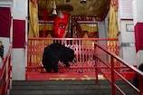 VIDEO: इस देवी मंदिर में भालू करते हैं माता की परिक्रमा