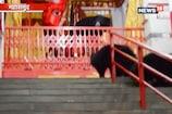 VIDEO: इस देवी मंदिर में दर्शन के लिए पहुंचता है भालुओं का परिवार