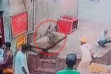 संपेरे के हाथ से सांप छीन कर भागा बंदर : देखें VIDEO