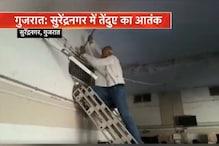 VIDEO- गुजरात: कोर्ट रूम में तेंदुआ घुसने से मची अफरा-तफरी