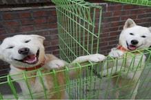 सिर्फ आश्रय गृहों से खरीद कर पालतू जानवर बेचें Pet Shops