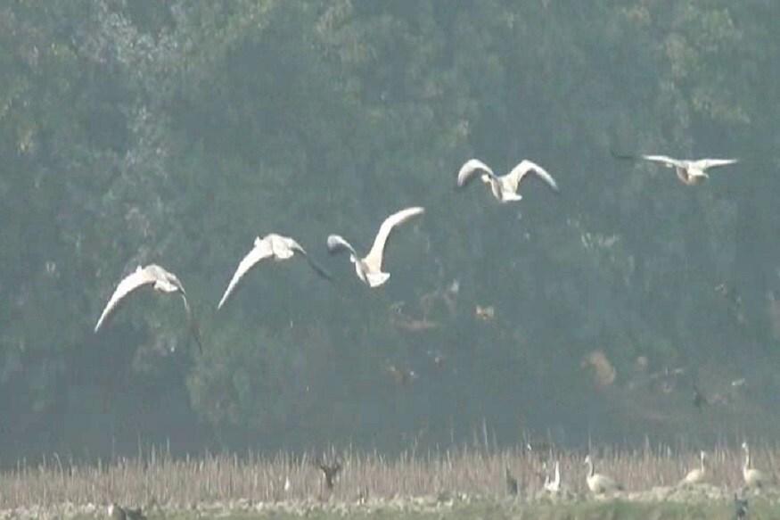 कुरुक्षेत्र के थाना गांव में प्राचीन ब्रम्हसरोवर है. इस सरोवर में सदियों से प्रवासी पक्षी गुलाबी ठंड की दस्तक के साथ ही पहुंच जाते हैं. इस साल भी इन परदेशी पक्षियों ने थाना गांव के ब्रह्म सरोवर में डेरा डाल दिया है. गांव वालों का कहना है कि 25 से 30 प्रजाति के सैकड़ों परिंदे यहां पहुंचते हैं. लेकिन चिंता की जो बात है कि लगातार इन परिदों की संख्या कम होती जा रही है. कारण प्रदूषण और धरती का बढ़ता तापमान है.