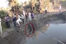VIDEO: गांव में घुसा सात फीट का मगरमच्छ, वन विभाग ने किया रेस्क्यू