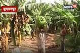 VIDEO: किसान हितों में खर्च होगा केले की फसल से मिलने वाला शुल्क