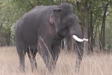 जांजगीर के सक्ती वन परिक्षेत्र पहुंचा हाथियों का दल, महिला को दौड़ाया