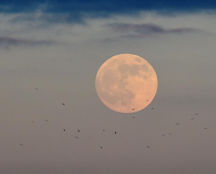 2019 की पहली पूर्णिमा को टेनबी, पेम्ब्रोकशायर, वेल्स, ब्रिटेन से चंद्र ग्रहण का नजारा. (चित्र: रॉयटर्स)
