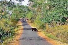 VIDEO: अचानकमार टाइगर रिजर्व से भटककर गांव पहुंचा भालू