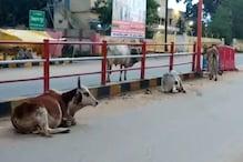 सूरजपुर: मालिकों की लापरवाही के कारण सड़कों पर मंडराते हैं मवेशी: नगर पालिका