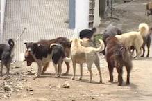 VIDEO: शिमला में कुत्ता पालना होगा महंगा, ये है वजह