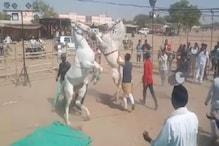 VIDEO: अश्व मेला : ढोल की थाप सुन दो पैरों पर खड़े होकर नाचने लगती हैं घोड़ियां