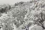 VIDEO: नैनीताल ने भी ओढ़ी बर्फ़ की चादर, 6 इंच तक बर्फ़ से मुक्तेश्वर की सड़कें बंद