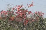 VIDEO:  पलाश के फूलों में हैं चमत्कारी औषधीय गुण, किडनी रोग से लेकर डायबिटीज के लिए है लाभकारी