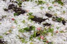 VIDEO: ओलावृष्टि ने बढ़ाई सेब बागवानों की चिंता, इन जिलों में हुआ ज्यादा नुकसान