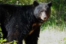 कोरबा: भालू ने ग्रामीण पर किया हमला, पालतू कुत्तों ने बचाई जान
