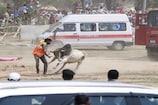 मायावती के हेलीपैड पर सांड ने लोगों को दौड़ाया, बाल-बाल बचे लोग