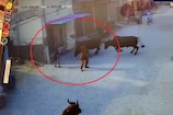 स्कूल से घर लौट रहे बच्चे को सांड ने मारी टक्कर, VIDEO वायरल