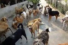 जानलेवा कुत्तों का शहर में आतंक जारी