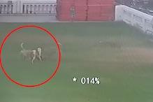 तीन कुत्तों के बीच फंसा मासूम, फिर क्या हुआ? देखें CCTV