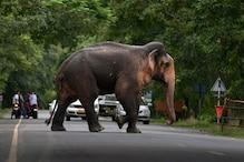 रात में हाथी ने परिवार पर किया हमला, किशोरी की मौत
