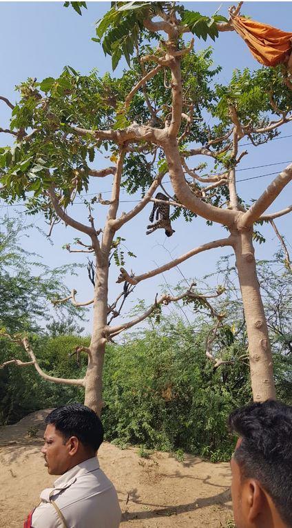 सेव अरावली से जुड़े पर्यावरणविद् जितेंद्र भड़ाना कहते हैं कि मंडावर के आसपास नेताओं ने अपने फार्म हाउस बनाकर जंगल को तहस-नहस कर दिया है. भोजन से अधिक प्यास बुझाने के लिए तेंदुए या अन्य वन्य जीव रिहायशी इलाकों की ओर भागते हैं. जिसकी वजह से यह इन इलाकों में देखे जाने लगे हैं. जंगल में न पीने के पानी का इंतजाम होता है और न ही शिकारियों से सुरक्षा.