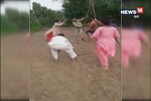 VIDEO: बिलासपुर में फैंसिंग करने को लेकर खूनी झड़प,दो घायल