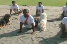 BSF के डॉग स्क्वॉड ने ऐसे मनाया योग दिवस, देखें VIDEO
