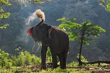 हाथियों के खौफ में मकान छोड़ तंबू लगाकर रात गुजार रहे लोग