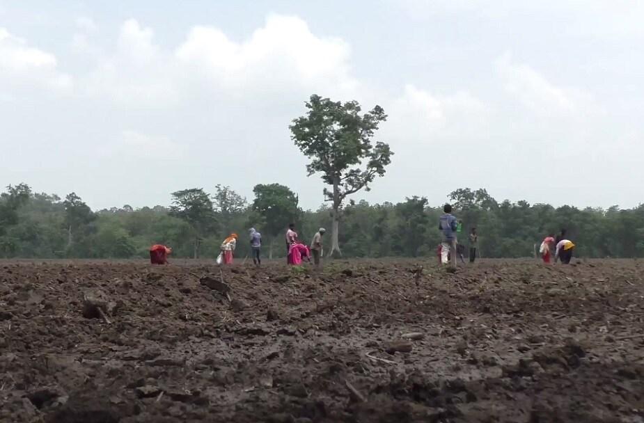 इस वन प्रभाग में 384 हेक्टेयर वन भूमि से सागौन को काट कर यहां मिश्रित वनों को तैयार किया जा रहा है.