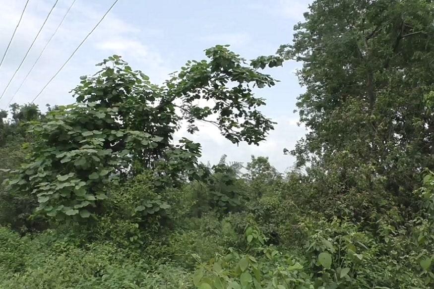 उत्तराखंड वन विभाग एक अनूठा प्रयोग करने जा रहा है. यहां बेशकीमती इमारती लकड़ी देने वाले सागौन के जंगलों को काटकर नया जंगल बनाने की तैयारी चल रही है. माना जा रहा है कि इससे न सिर्फ़ वन संपदा बेहतर होगी बल्कि मानव-वन्यजीव संघर्ष भी कम होगा. दरअसल रामनगर में तराई वन-प्रभाग में यह प्रयोग किया जा रहा है. यहां के जंगल अपनी बायोडायवर्सिटी के लिए जाने जाते हैं. कॉर्बेट नेशनल पार्क के पास होने के कारण यहां वन्यजीवों की भी अच्छी ख़ासी तादाद है. वन महकमा अब यहां मिश्रित वनों की बुवाई कर रहा है.